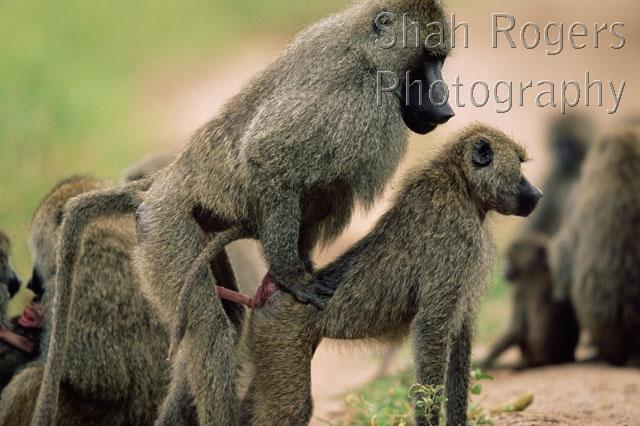 baboo dating sex vidjo