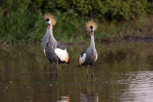 LARGE AFRICAN BIRDS