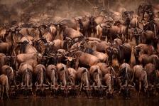 AFRICA;ANTELOPES;ARTIODACTYLA;BOVIDS;DRINKING;GROUPS;HORIZONTAL;MAMMALS;RESERVE;