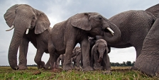 MAASAI MARA REMOTE CAMERA