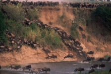 AFRICA;ANTELOPES;ARTIODACTYLA;BOVIDS;GROUPS;HORIZONTAL;JUMPING;LANDSCAPES;MAMMAL