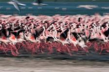ABSTRACTS;ARTY_SHOTS;BIRDS;EAST_AFRICA;FLAMINGOS;RUNNING;VERTEBRATES;soft_shots