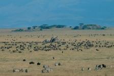 AFRICA;GEOLOGY;GRASSLAND;GROUPS;HABITAT;HORIZONTAL;LANDSCAPES;MAMMALS;NP;PERISSO